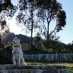 gorgeous husky (a rescue dog)