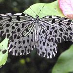 butterfly park kl 3