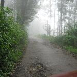 The misty trail just outside the hotel- beautiful