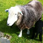 Ewe Tree Farm (permanent resident)