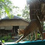 Bambou, la mascotte du guest house