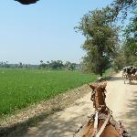 Fahrt mit der Pferdekutsche