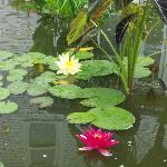 Sit by the lily pond