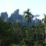 View to the limestone peaks through the treetops