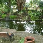 Duck Pond in the grounds