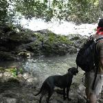 The dog accompaniment to the waterfall