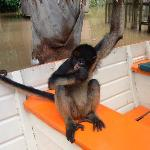 A monkey in the boat during a day trip