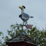 Whimsical seagull