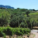 Jericho Canyon Vineyards