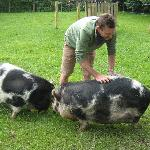 Farmer Tim and pigs