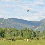 parachutes, scenery, horses