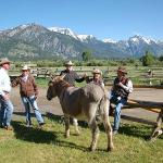 staff, guests, and two donkeys gathered at corral