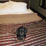 Room #105...thanks for being pet-friendly!