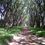 Jacaranda Lane -Highgroves Driveway