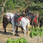 Granada ponies