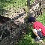 Pet & feed deer near Assmannshausen gondola (near monument)