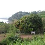 Jungle and ocean views - plus toucans in distance