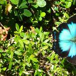 Butterflys in the gardens