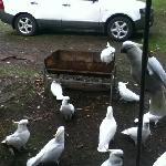 friendly cockies :)