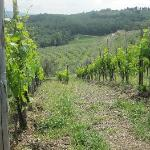 One of the vineyards.
