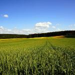 Landschaft in Gehdistanz (Juni-Vegetation)