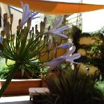 Terrace viewed from the Agapanthus