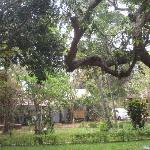 the grounds are filled with mature trees