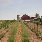 Amish Farm!