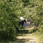 Amish horse tied up in a clearing off the bike path!
