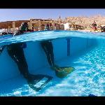 free diving school