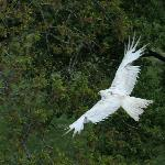 Stunning 'White' Kite