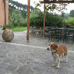 Außenbereich und unser kleiner Besucher Leo