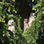 I spotted 3 owls watching me in the pine trees