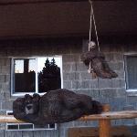 Bear cubs on swings were cute