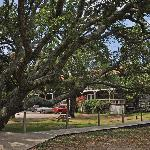 Live Oaks and the Motel