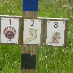 Cute trail marker symbols.