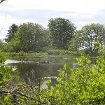 Pond found along trail to the beach.