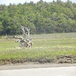 Beautiful driftwood.