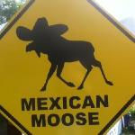 try the Mexican Moose!!!