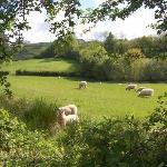 meadow pastureland  adjoining the garden, views over rolling countryside