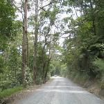 On the way to Tawharanui
