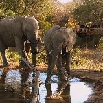 Waterhole at Umlani