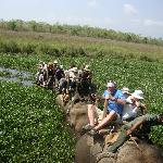 Photo de Tigerland Safari Resort