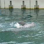 Dolphin Quest at Bermuda Maritime Museum