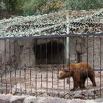 another bear in a tiny cage