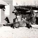 Eddie McKechnie and Piggy