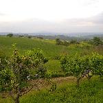 una veduta dalla domus etrusca