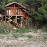 Pine Houses