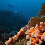 Anthia Diving Center