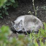 Resident cat, Schmeegle.